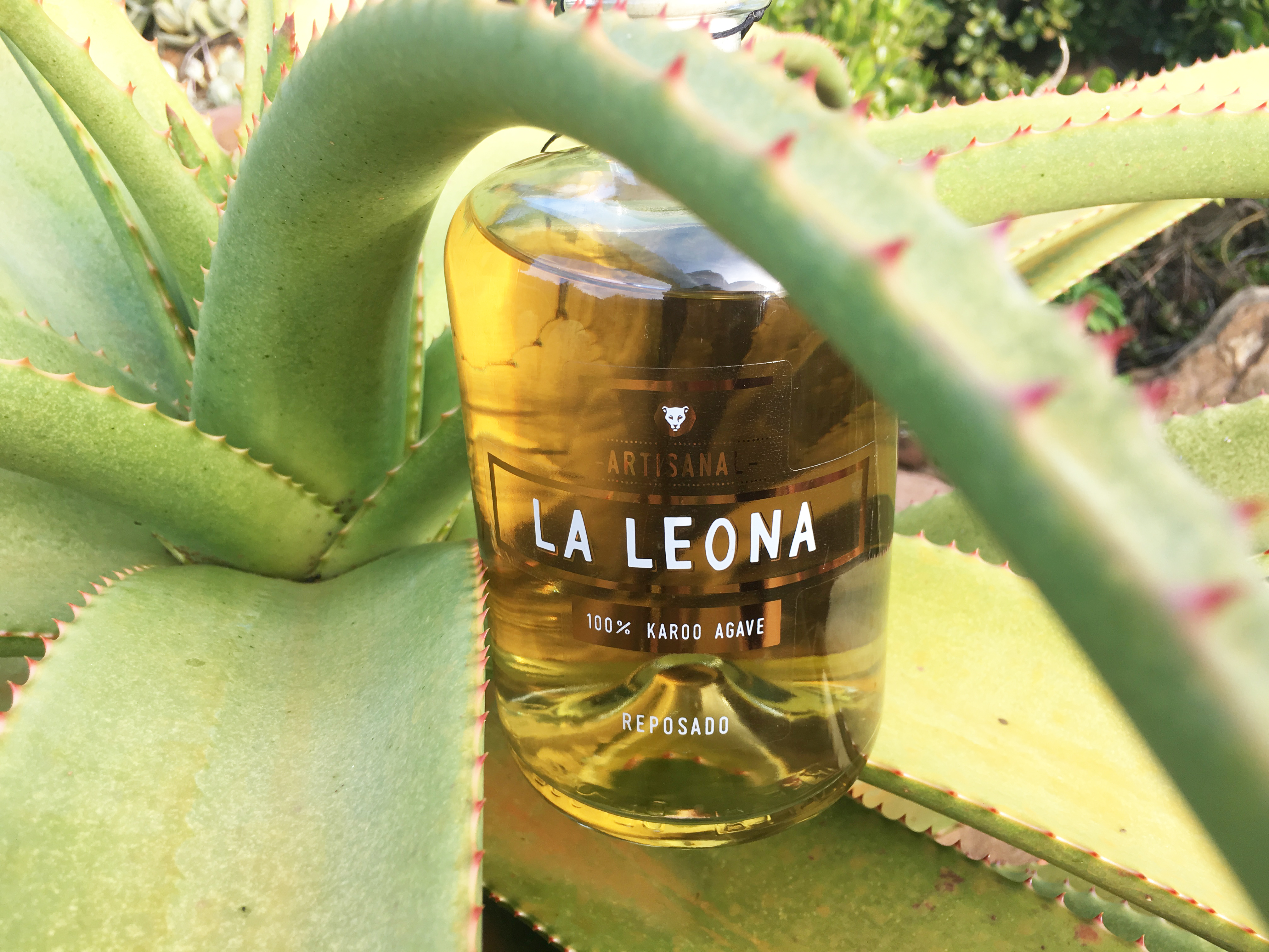 The Social Needia Reviews La Leona Agave Spirit Tequila