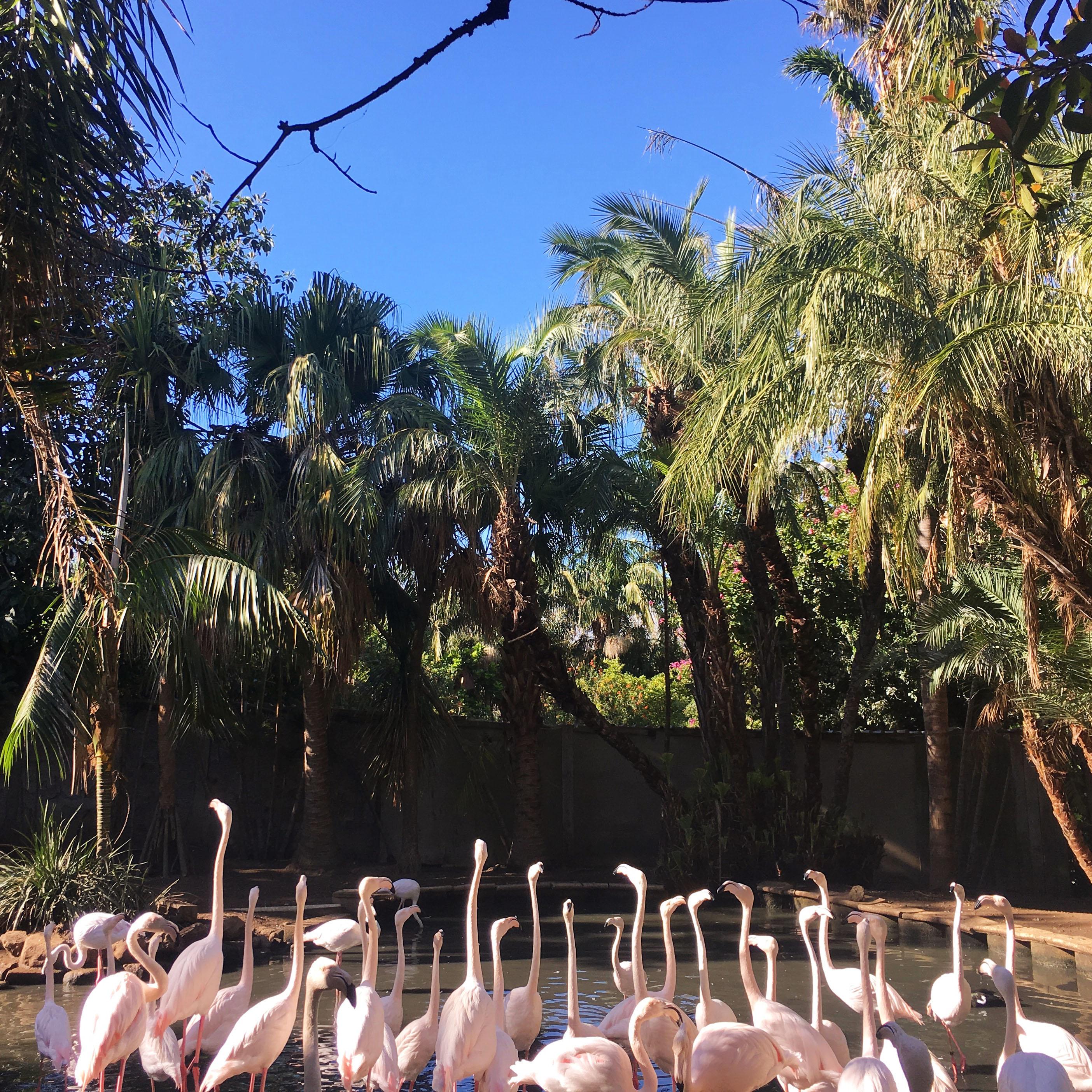 The Social Needia x The World of Birds Hout Bay